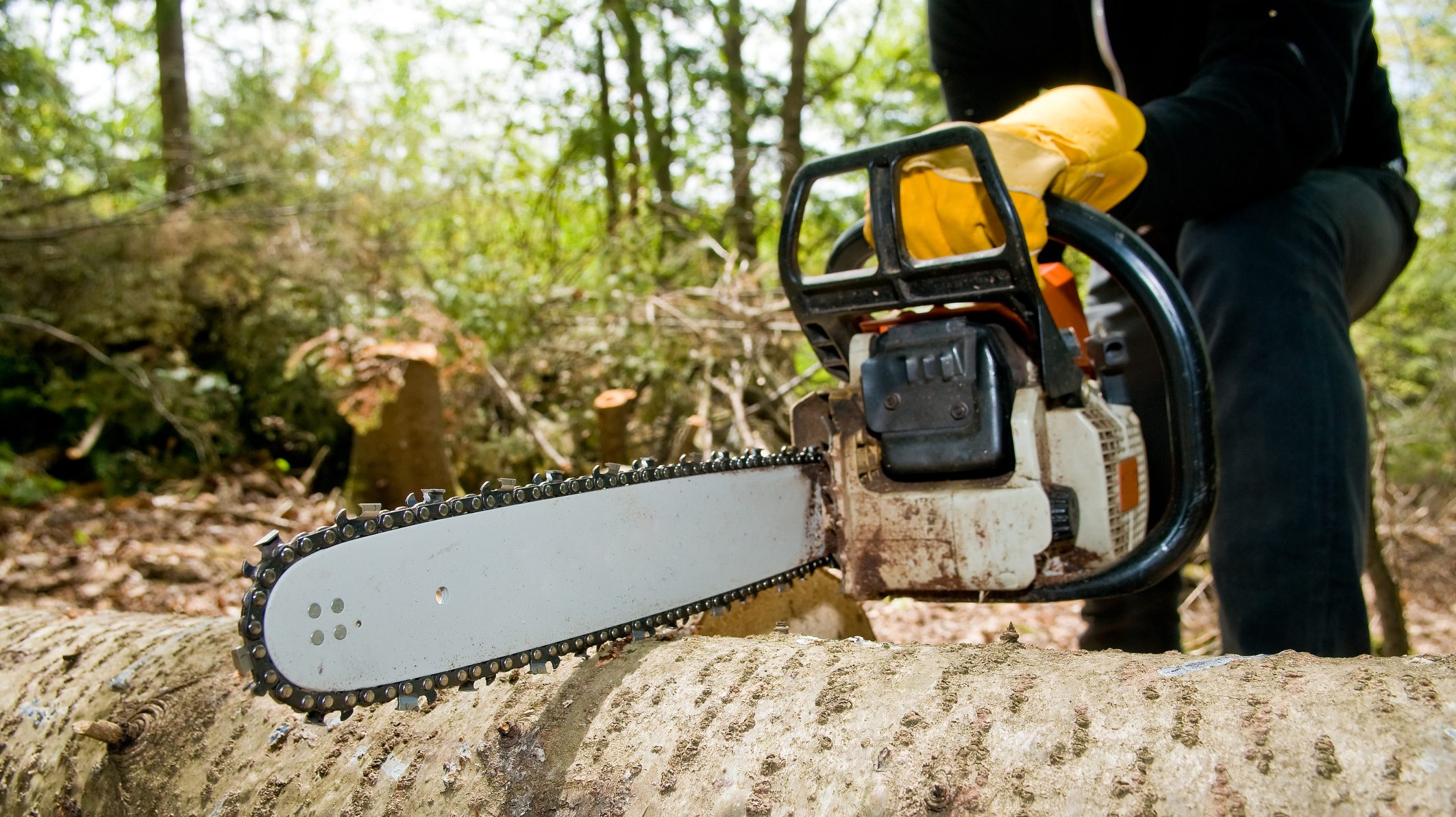 Tree Removal & Lawn Services - Just another WordPress site